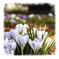 Цветники для надгробий